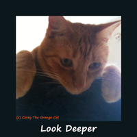 Corey The Orange Cat - Look Deeper