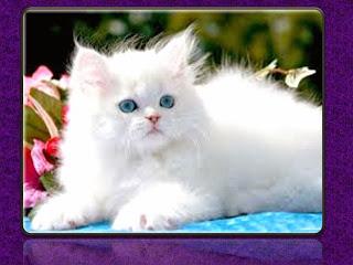 tips atau acar memandikan kucing kesayangan kita