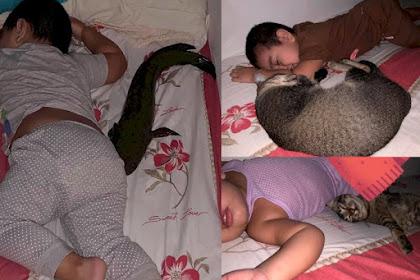 Unik ! Bocah Ini Tidur Bareng Ikan Gabus / Haruan di Atas Kasur !