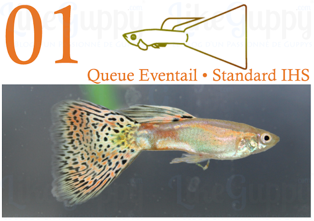 guppy-queue-eventail-standard-ihs