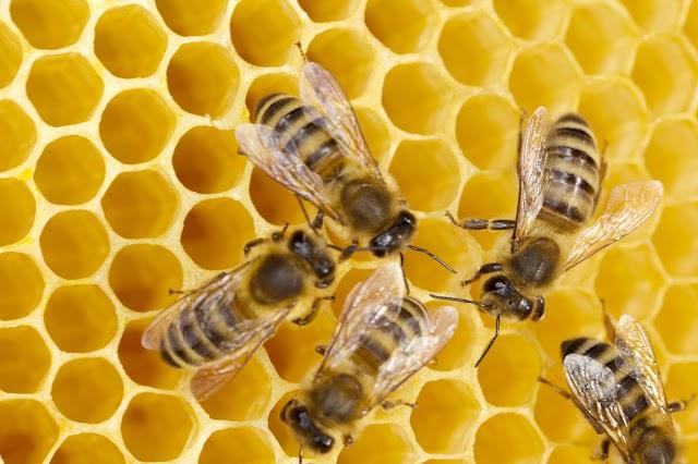 Tips Kejayaan dari Lebah!