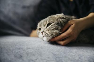 Kucing dan manusia