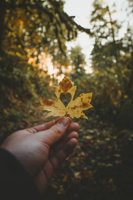 leaf with heart cutout.Photo by Anthony Intraversato on Unsplash