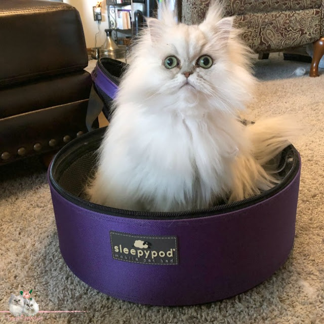 Persian Cat inside Sleepypod carrier