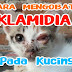 Cara merawat dan mengobati klamidia pada kucing