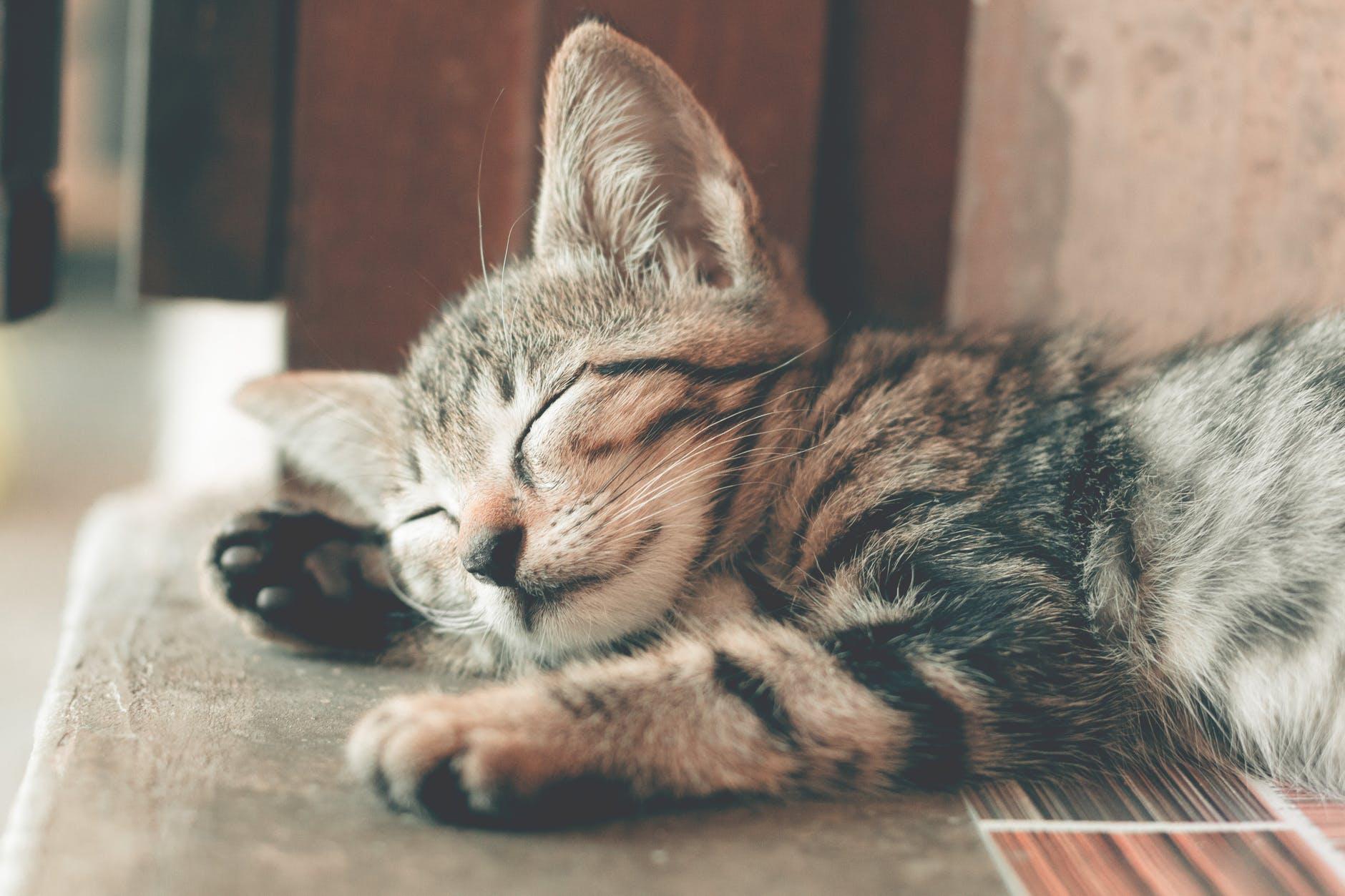 Pourquoi Mon chat dort tout le temps, est-ce normal?
