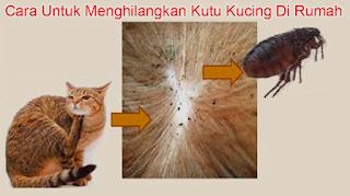 Cara Untuk Menghilangkan Kutu Kucing Di Rumah