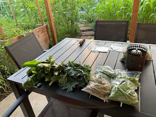 Beans and greens on patio table
