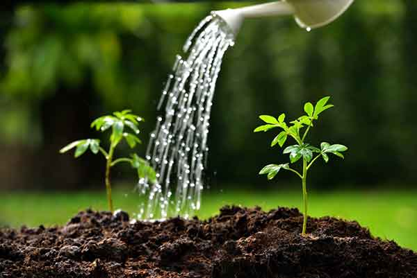 Cara Merawat Tanaman Supaya Tidak Cepat Layu dan Tumbuh Besar
