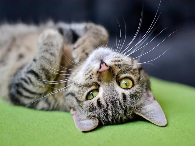 140+ Cute Cat Images | Cat Wallpaper free download HD