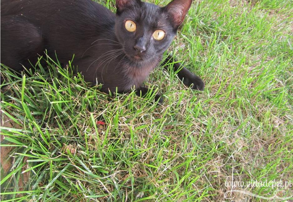 porque é que os gatos comem relva + gato preto + felino + blogue + animais de estimação + portugal + português + história real + pedro e telma + Maria preta