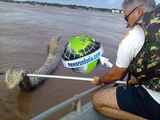 Cobra sucuri gigante é encontrada morta no Rio Madeira – VEJA FOTOS