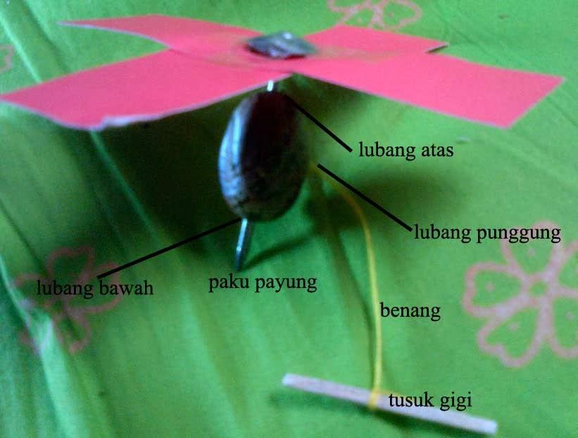 mainan tradisional anak - cangkirik dari biji karet