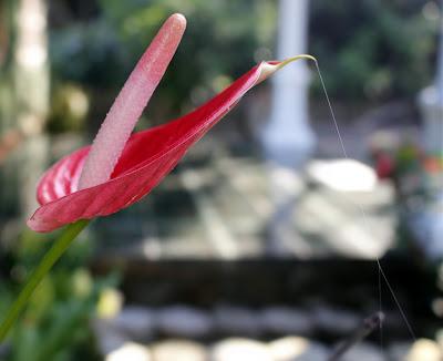 Foto Macro Bunga Yang Indah Di Taman