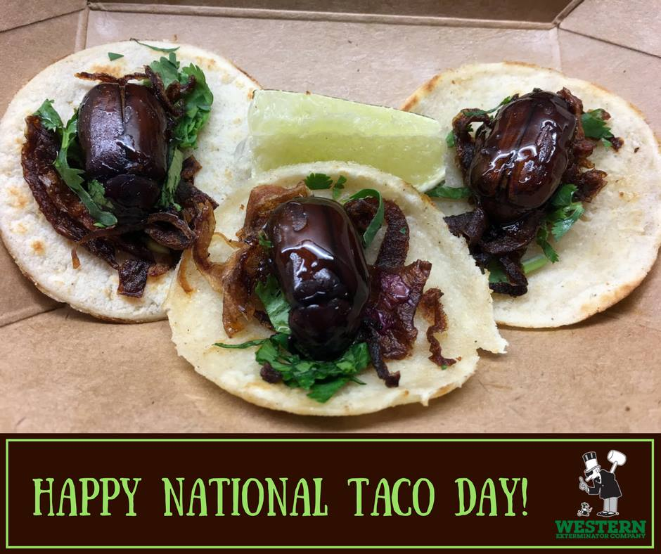 National Crunchy Taco Day Wishes Photos