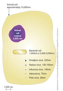 Perbandingan ukuran virus  dibandingkan dengan ukuransel bakteri dan sel hewan