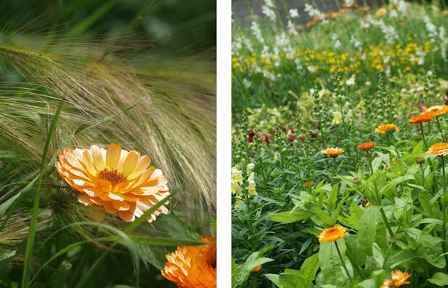 Havekonkurrence på Sollinden 2015 med vilde blomster
