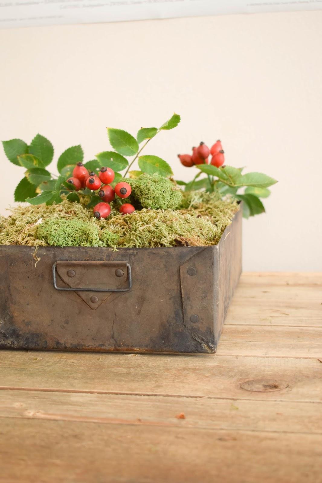 Herbstliche Deko für den Tisch, Sideboard und Konsole. Dekoidee mit Moos, Hagebutte Islandmoos