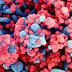Cientistas anunciam que vacina desenvolvida em Oxford contra o coronavírus é segura e induz imunidade