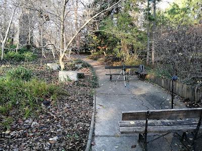 Widok na ogród i sprzęt do udźwiękowienia podkastu