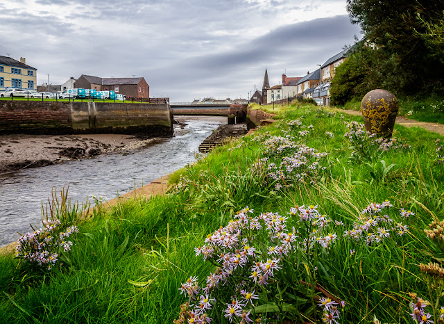 Photo of wildflowers on the banks of the River Ellen
