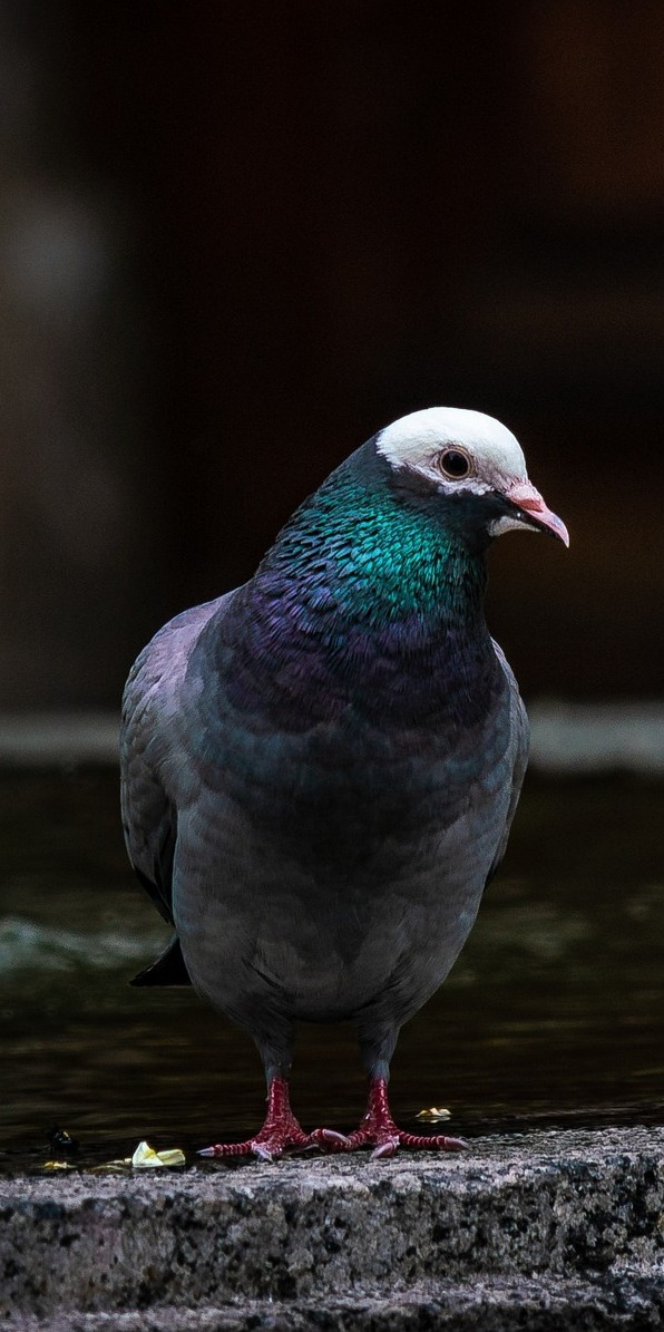 A pigeon at a fountain.
