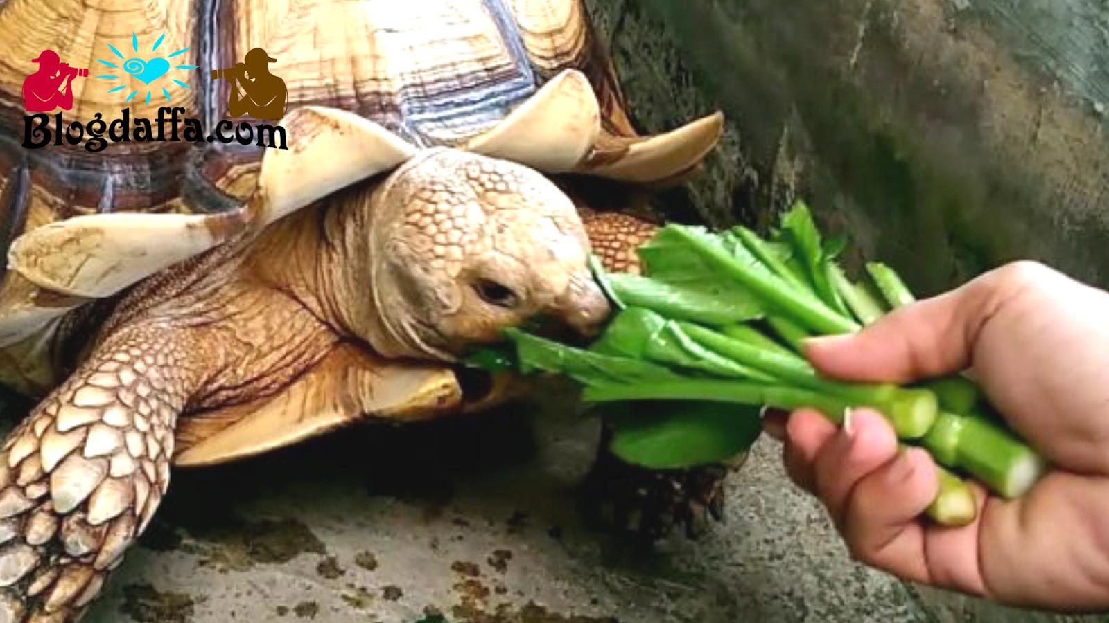 Cara memberi makanan kura-kura yang baik dan benar