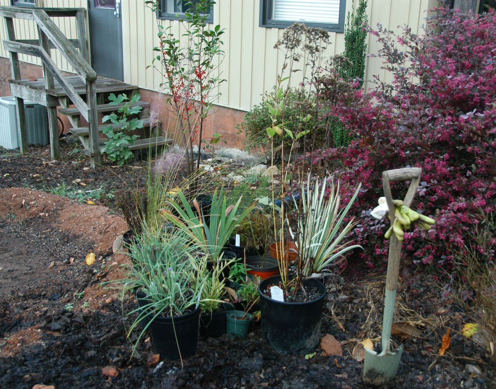 Vernonia S Natural Choice