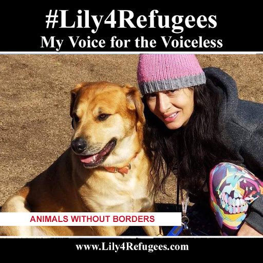 Lily4Refugees is supporting