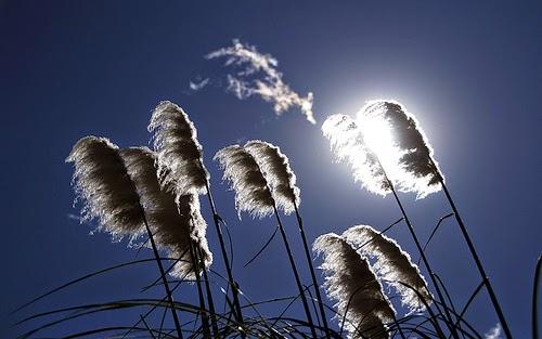 حجب أشعة الشمس بالهدف في التصوير عكس الضوء