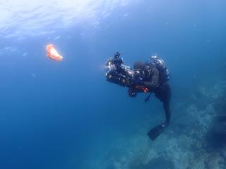 2021年5月6日の柏島ダイビング