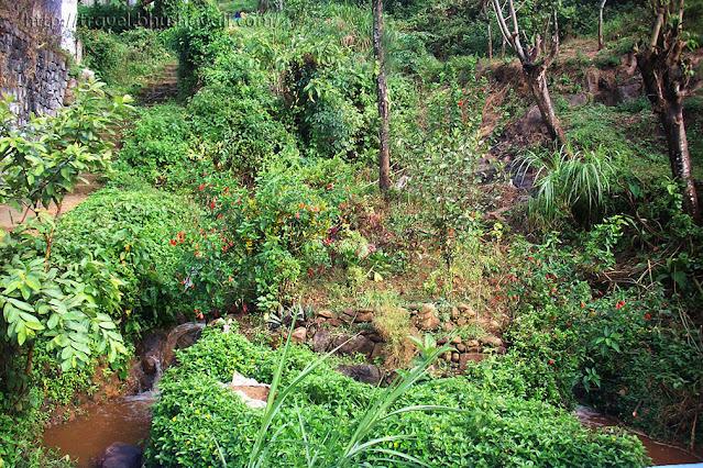 Vazhachal Forest photos