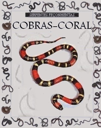 Coral-432