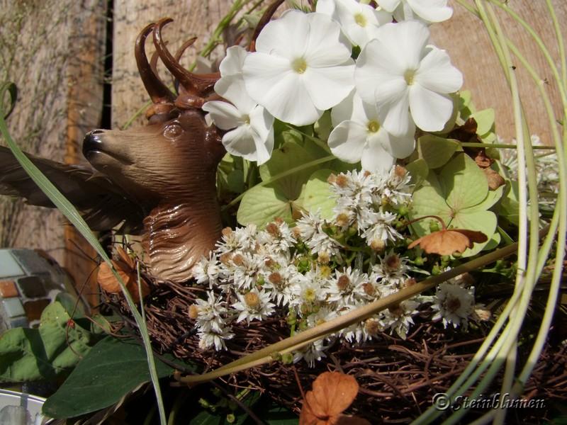 Perlkörbchen Blüten trocknen