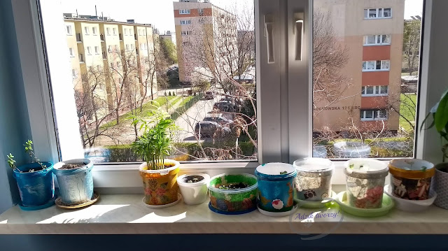 Adzik tworzy - diy ogródek w domu