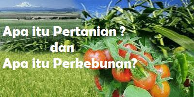 Perbedaan Pertanian Dan Perkebunan Sarjana Pertanian
