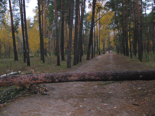 поваленные деревья