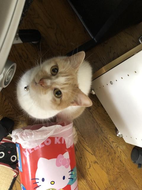 ゴミ箱をひっくり返す猫