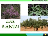 http://cplosangeles.juntaextremadura.net/web/edilim/curso_4/cmedio/las_plantas/las_plantas/las_plantas.html