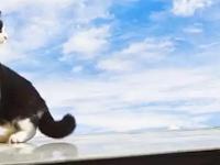 Kisah Mueeza Lengkap, Kucing Kesayangan Nabi Muhammad SAW