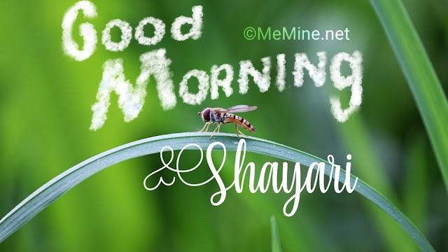Good Morning Shayari 2019 for whatsapp and facebook