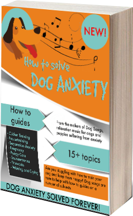 Apartment Dog Anxiety - SOLVED