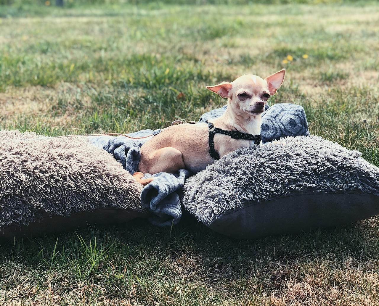 Toshi multi-vitamine hond