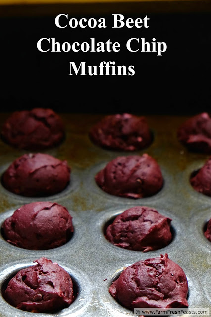 Shredded beets combined with cocoa powder and chocolate chips in a buttermilk-soaked oatmeal muffin. Farm share beets become a sweet treat!