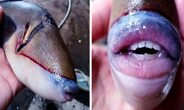 Bizarre fish pictured with eerily human-like teeth caught by angler in Malaysia