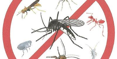 Fuera insectos de nuestro habitat