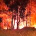 Incêndio na mata da Avenida Formoso