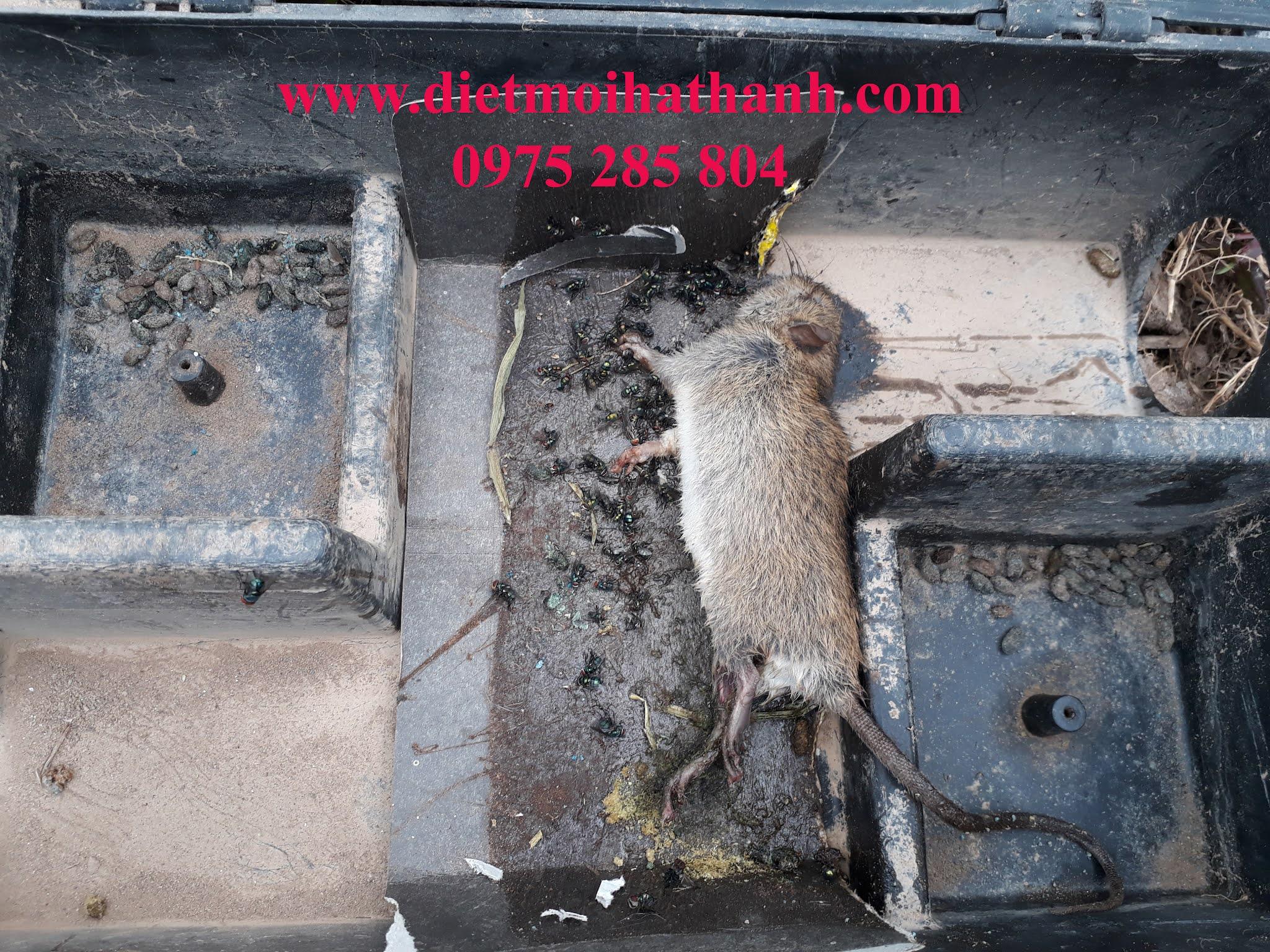 diệt chuột tại bắc ninh
