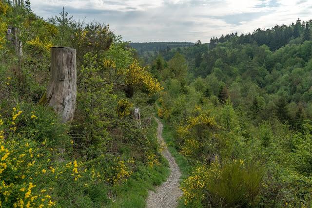 Traumschleife Masdascher Burgherrenweg  Saar-Hunsrück-Steig  Wandern Kastellaun  Premiumwanderweg Mastershausen  Deutschlands schönster Wanderweg 2018 14