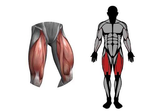 العضلات المستهدفة في تمارين السكوات
